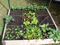 Faire pousser du konjac facilement en 5 étapes